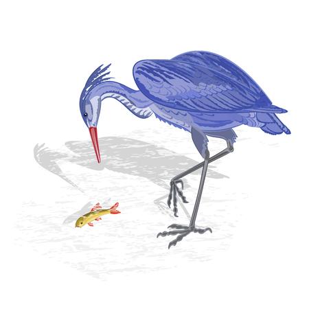 egret: Heron hunting fish vector Illustration without gradients Illustration