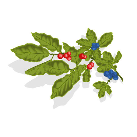 whortleberry: Blueberries twig with leaves and berries vector illustration without gradients