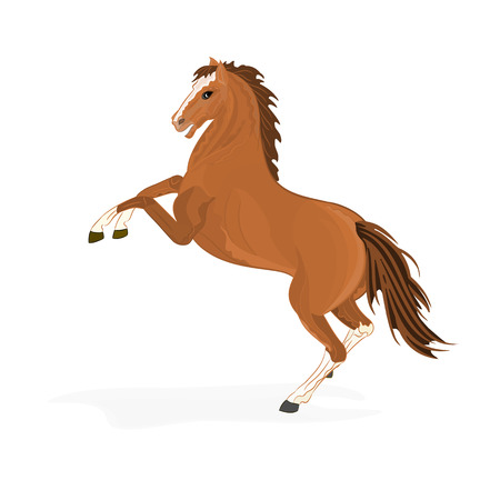 piebald: Brown horse vector illustration without gradients
