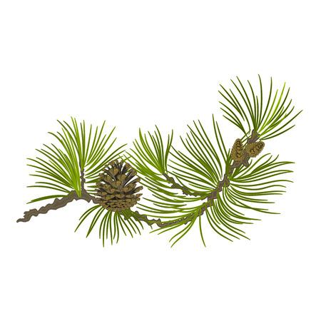 albero pino: Filiale dell'albero di Natale pino pigne ramo whit illustrazione vettoriale