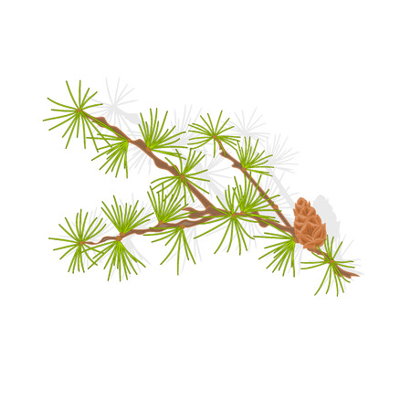 Larch tamarack branch christmas tree vector illustration Vector