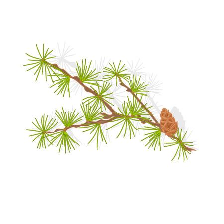 Lariks tamarack tak kerstboom vector illustratie