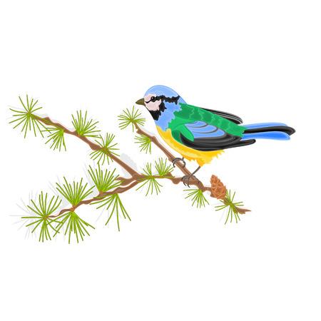 titmouse: Titmouse bird on branch larch vector illustration