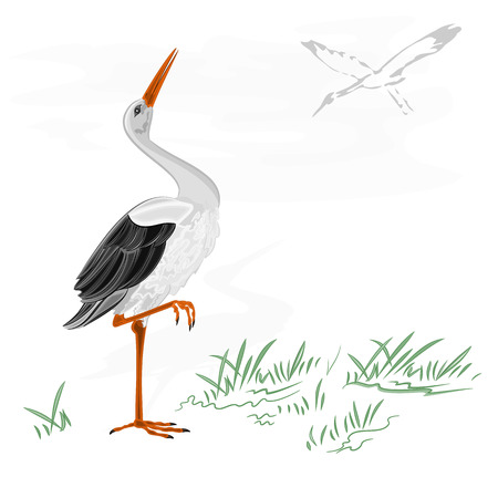 Storks white wild water bird vector illustration Vectores