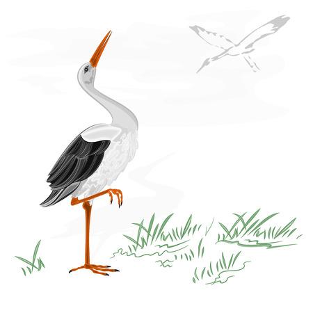 Storks white wild water bird vector illustration Иллюстрация