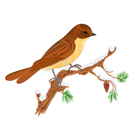 christmas motive: Bird on a branch of pine in the snow Christmas motive vector illustration Illustration