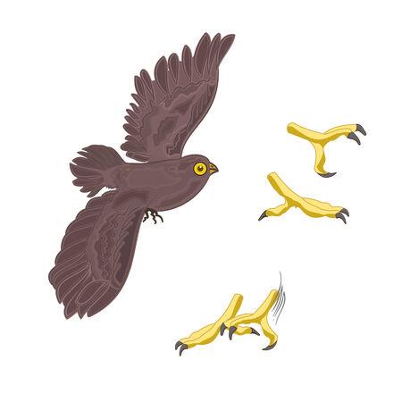 talons: Halloween mystery design owl and talons vector illustration Illustration