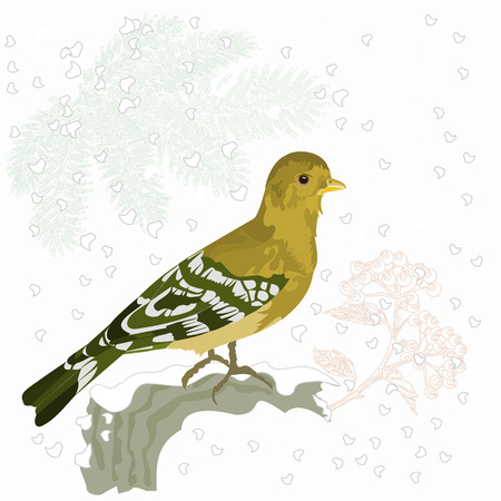 christmas motive: Bird and snow on a branch of spruce and berries Christmas motive vector Illustration
