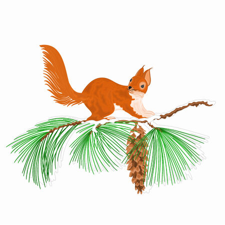christmas motive: Squirrel on a snow branch and pine cones Christmas motive vector