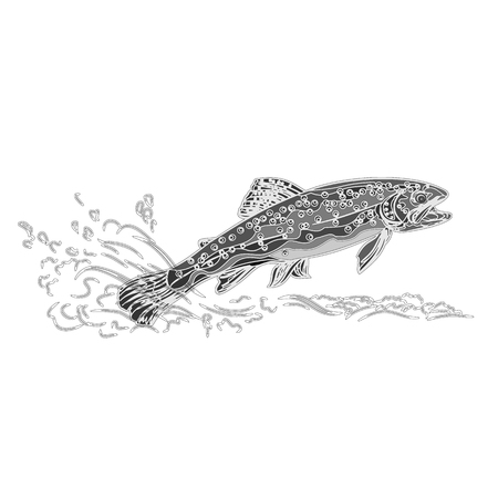 brown trout: Brown trout salmonidae as vintage engraved black illustration