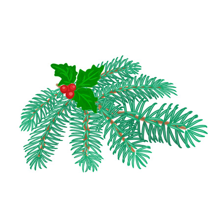 trimmings: Christmas decoration branch of spruce Christmas tree and holly vector illustration Illustration