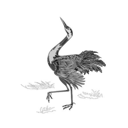 cattail: Dancing crane wildlife animal neck engraving vintage vector illustration Illustration