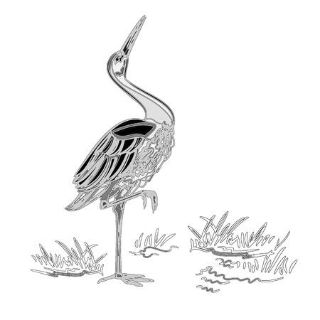 water bird: White Stork water bird vintage engraving  vector illustration