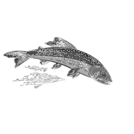 brown trout: American brook trout salmonidae fish as vintage engraved vector illustration