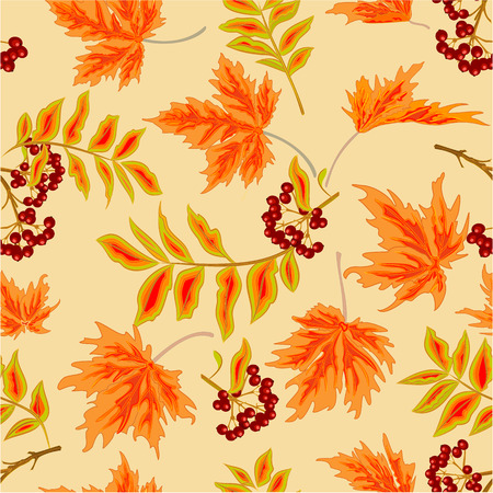 rowanberry: Seamless texture rowanberry and maple leaves autumn Thanksgiving Day theme vector illustration Illustration