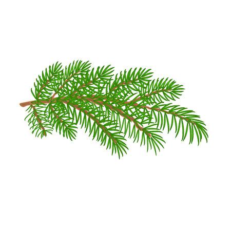 Branch  Spruce Christmas tree symbol celebration white background vector illustration
