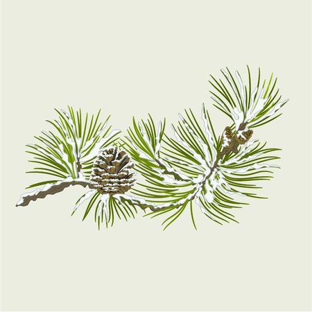 Tak van Kerstboom met sneeuw Pine tak whit dennenappel vector illustratie Stockfoto - 33740866