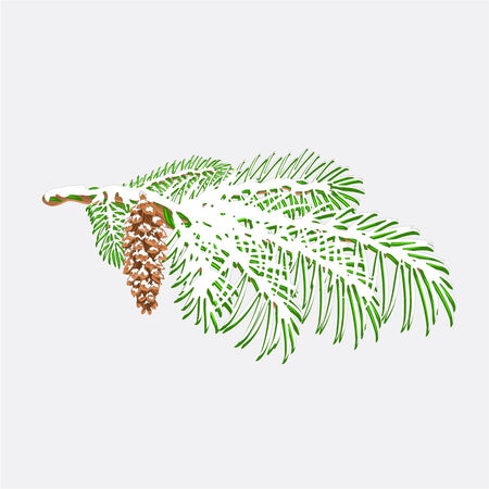 snow cone: Branch Christmas tree  with snow Pine branch whit pine cone vector illustration