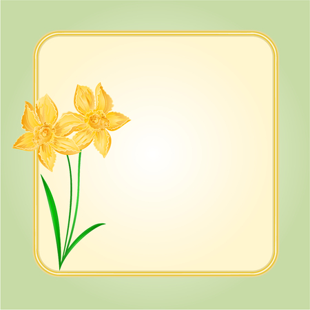 Daffodil Spring flower background frame place for text vector Illustration
