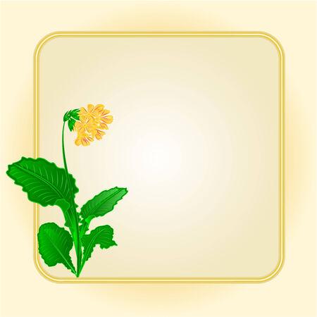 primrose: Primrose spring flower  gold background frame place for text vector Illustration