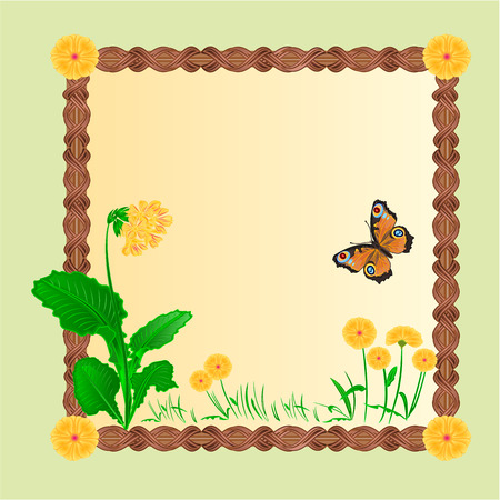 inachis: Frame spring primrose background with butterflies place for text vector illustration