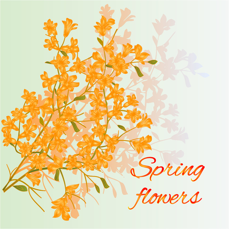 forsythia: Forsythia spring flowers spring background place for text vector illustration