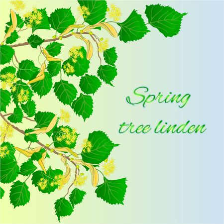 linden tree: Spring tree linden Spring green background vector illustration Illustration