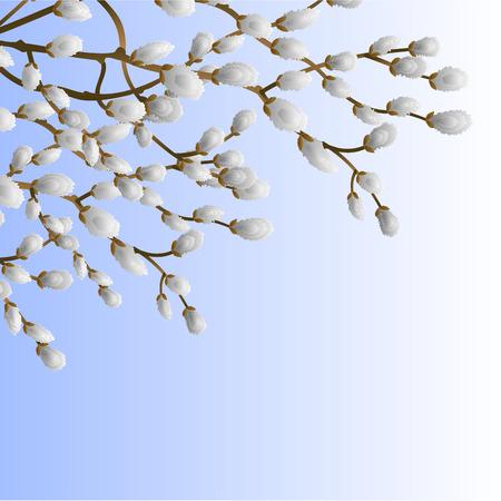 Pussy willow branch spring background  vector illustration Иллюстрация