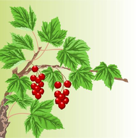 a twig: Twig garden currant bushes with red berries vector illustration