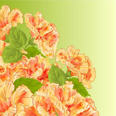shrub: Flowering shrub yellow hibiscus  floral background vector illustration Illustration