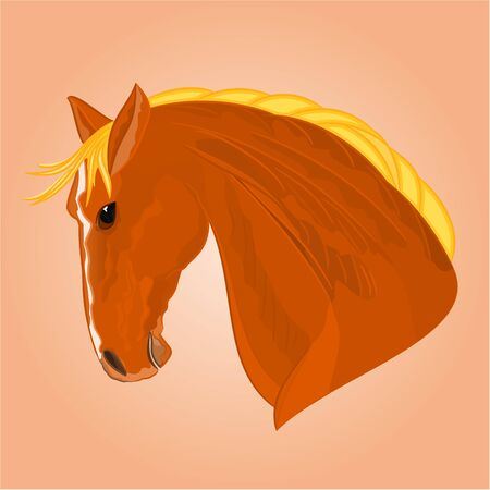 red horse: The head of a red horse stallion drawing vector illustration
