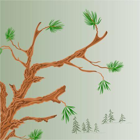 coniferous forest: �rbol de pino rama Viejo bosque de con�feras de fondo ilustraci�n vectorial