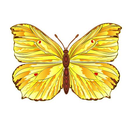 gonepteryx: Butterfly Gonepteryx rhamni beautiful Yellow  butterfly vector illustration