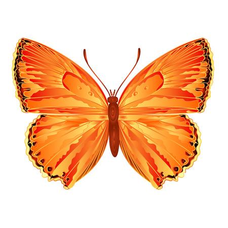 Butterfly Lycaena virgaureae  meadow butterfly vector illustration Illustration