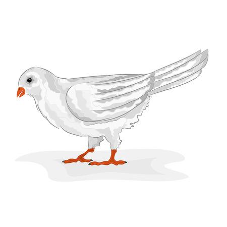 symbole de la paix: Oiseau pigeon blanc blanc symbole de la colombe de la paix vecteur illustration