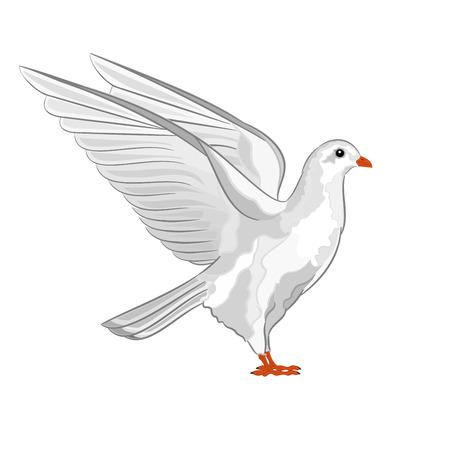 symbole de la paix: Colombe blanche symbole de la paix pigeon illustration