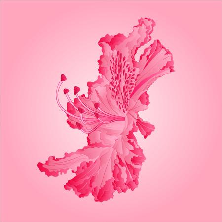 stamen: Rhododendron flower Mountain shrub illustration