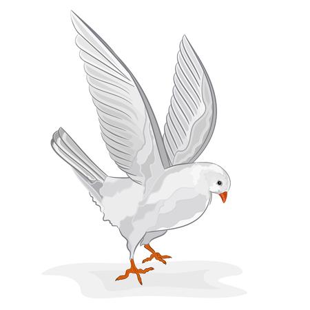 symbole de la paix: Pigeon blanc en vol blanche colombe symbole de paix illustration