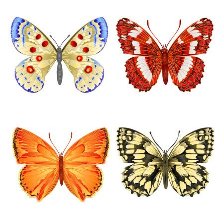 mountain meadow: Varios prado mariposas monta�a y mariposas forestales vectorial Vectores