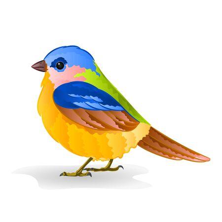 titmouse: Small titmouse bird cute songbird vector illustration