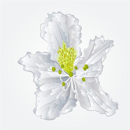 shrub: Mountain Rhododendron flower white spring shrub vector illustration