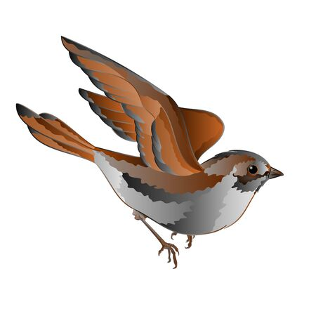 lore: Little bird cub Sparrow Passer domesticus in flight vector illustration