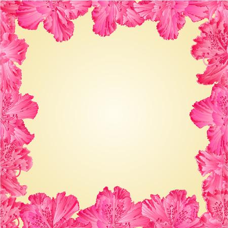 stamen: Seamless texture frame of pink rhododendron flower shrub Mountain vector illustration Illustration