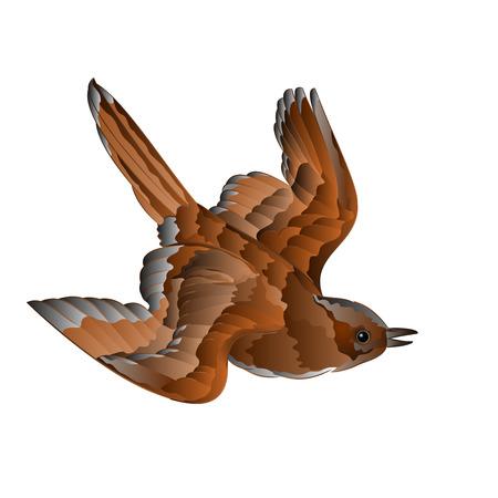 lore: Bird sparrow passer domesticus cub in flight vector illustration Illustration