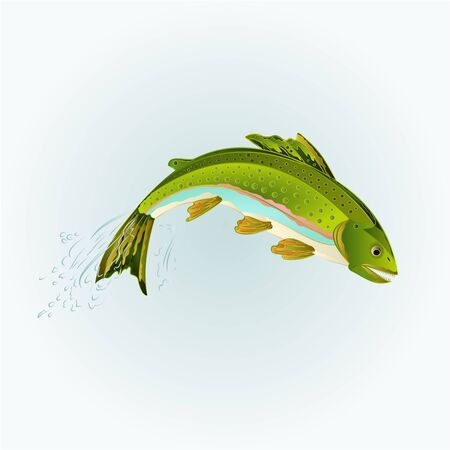 Leaping rainbow trout salmonidae fish vector illustration
