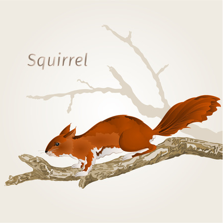rodent: Squirrel on an old tree natural rodent vector illustration Illustration