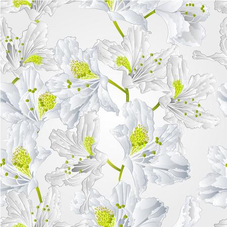 shrub: Seamless texture white flower Mountain rhododendron shrub vector illustration