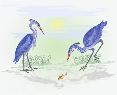 Herons water birds hunting fish Vector Illustration without gradients