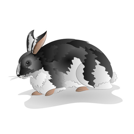 mottled: Mottled black and white rabbit isolated on white background vector illustration