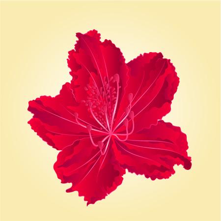 azal�e: Red Mountain rhododendron fleur simple ressort vecteur arbuste illustration